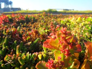 Install a GreenRoof.