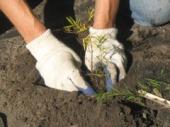 tree care 1