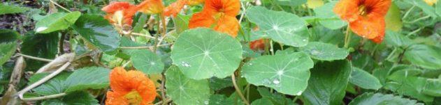 cropped-cropped-garden-4.jpg